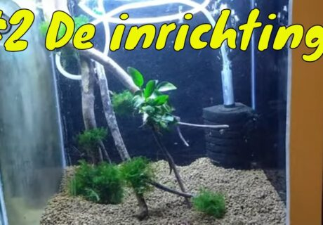 Hoe start je een Garnalen aquarium op? De inrichting