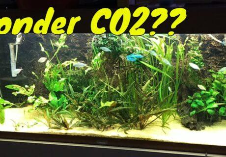 CO2 in het Aquarium: Wat gebeurt er als je plotseling stopt met toevoegen?! 10