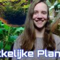 De MAKKELIJKSTE Aquariumplanten voor BEGINNERS! 2