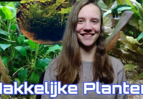 De MAKKELIJKSTE Aquariumplanten voor BEGINNERS! 1