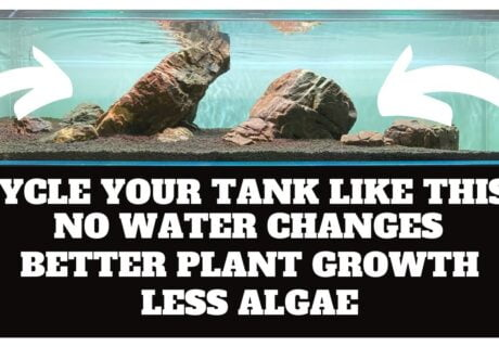 Avoid algae during start-up by cycling your planted tank like this! 1